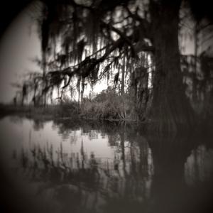 1_ alligator bayou 4